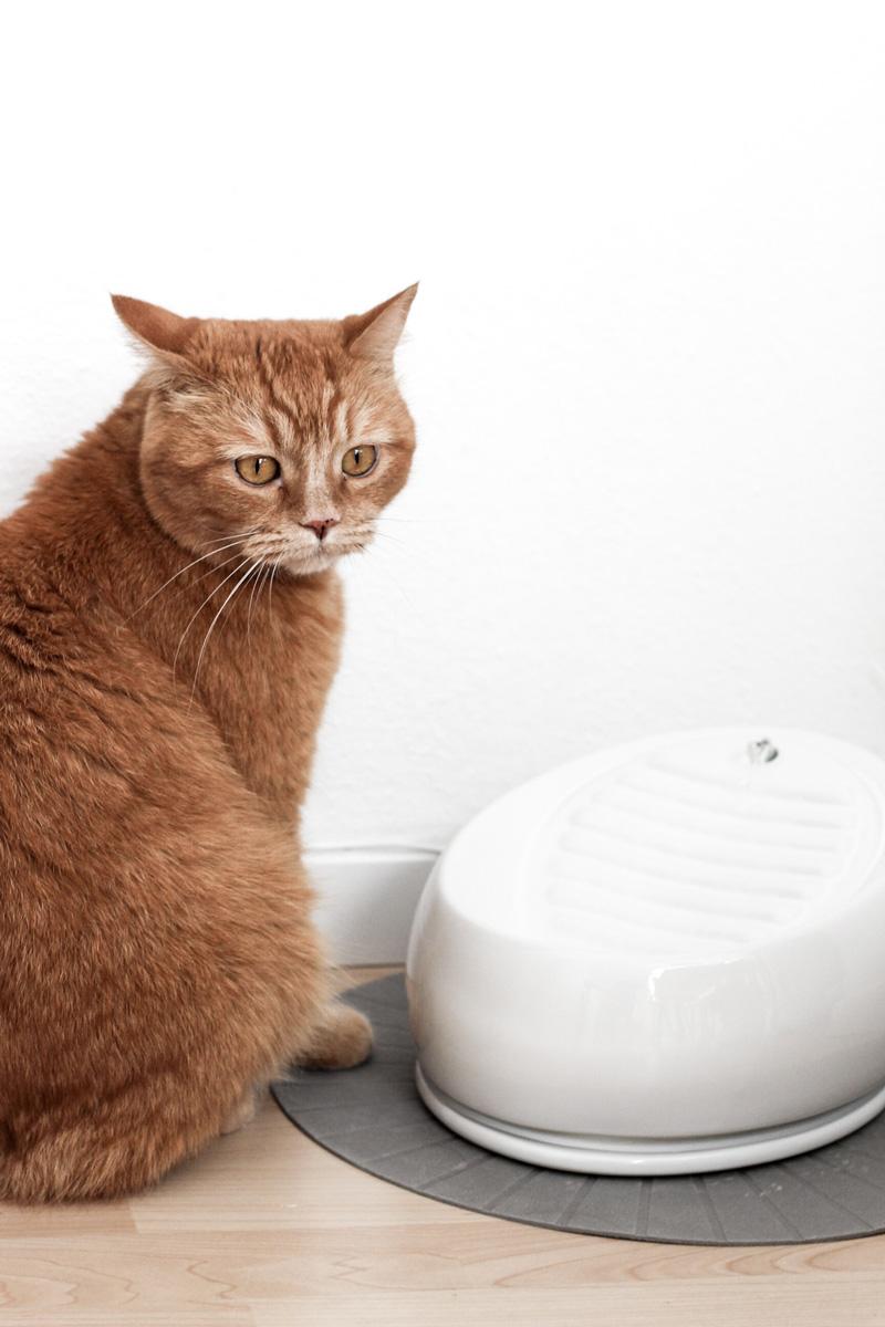 Der Trinkbrunnen für Katzen von Lucky Kitty - www.little-emma.de